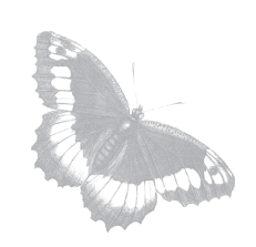 borbolea